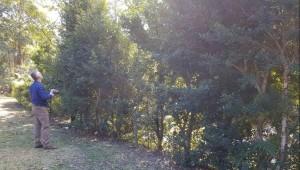 Wollongong Tree Reports