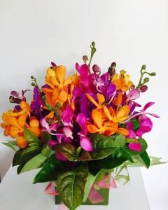 Send Orchids Online to Melbourne