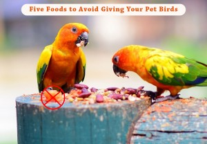 PCC-Foods-to-Avoid-Giving