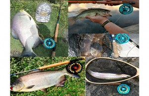 A2B2C-3 Ways to go Fly Fishing with a Spinning Rod