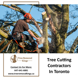 Tree removal contractor in toronto