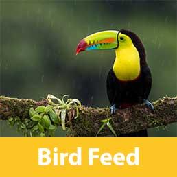 bird-feed