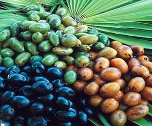 Saw Palmetto Berries Market
