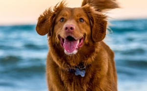 Tips for understanding the importance of pet identification tags