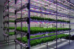 plant-growth-chambers-market