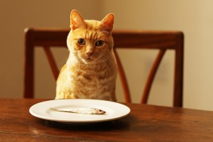 1800x1200_people_foods_cats_can_eat_slideshow